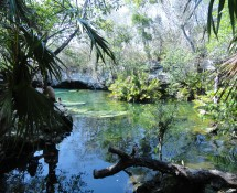 A Cenote on the highway between Playa del Carmen and Tulum